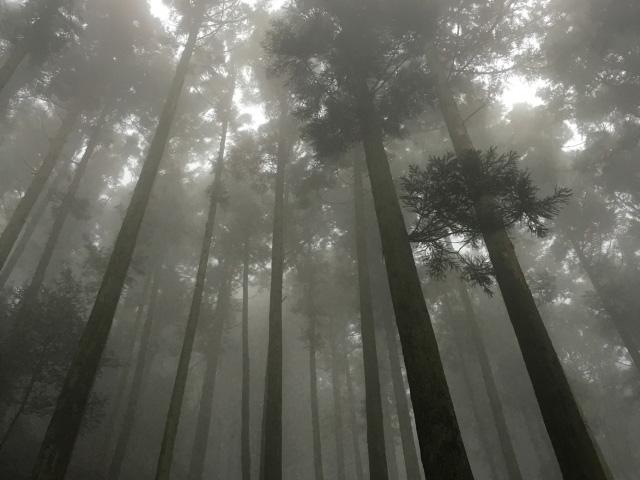 梅雨時の森