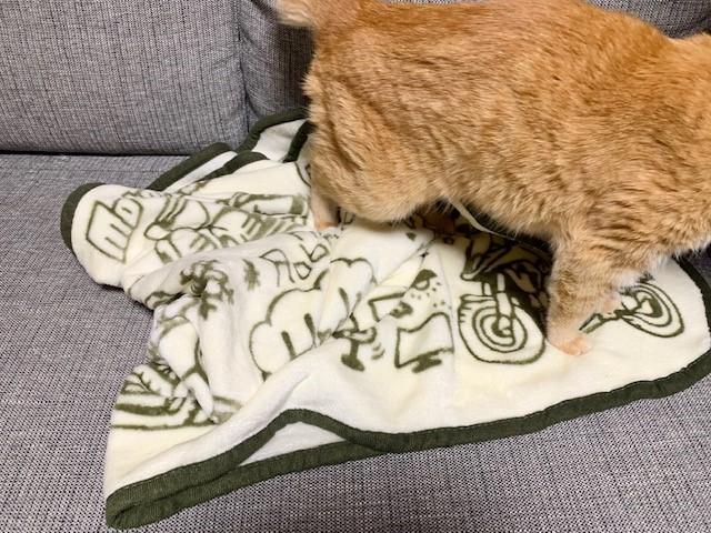 猫は新しいものがお好き