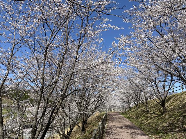 矢木羽湖公園